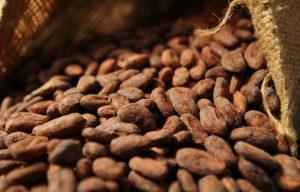 確認可可豆的產地與可可豆成分所佔的比例